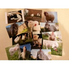 Becky Broiler Fundraiser Photo Packs